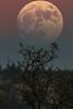 Fake_moon_1