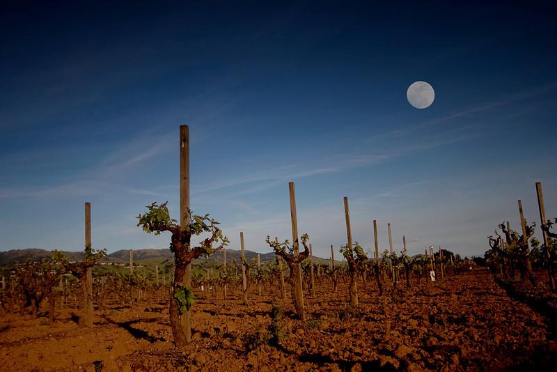 Vines_Moonrise