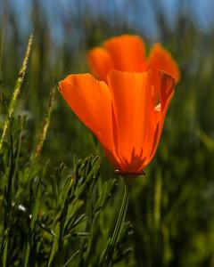 Oliger Pond Spring