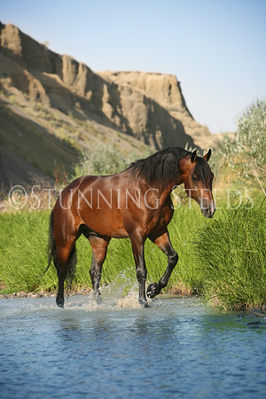 Pat Mitchell Performance Horses - Montana