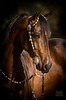 StunningSteedsPhoto-HR-1331-sig