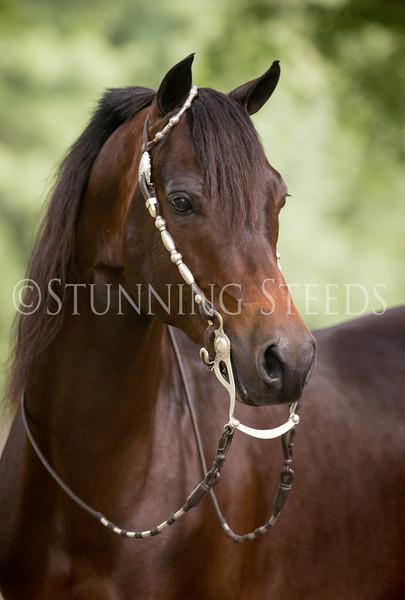 StunningSteedsPhoto-HR-6273