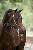 StunningSteedsPhoto-HR-6182