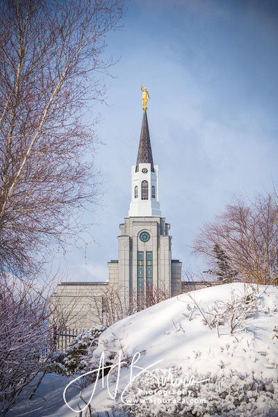 Morning Snow Vertical Boston Massachusetts Temple