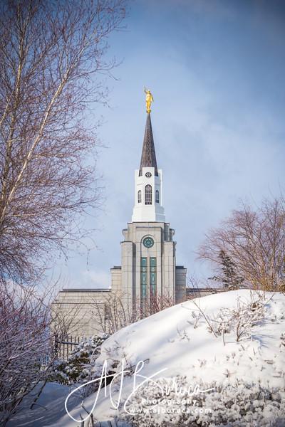 Morning Snow Vertical Boston Massachusetts Temple