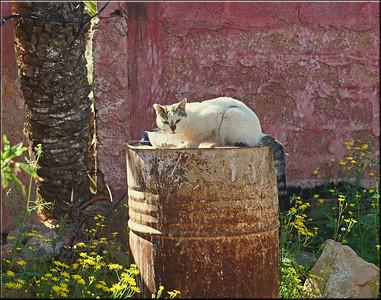 Tazka Cat