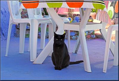 Breakfast Cat