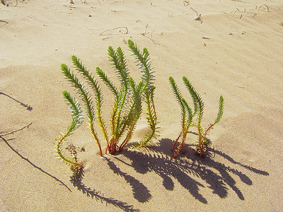 Desert Growth