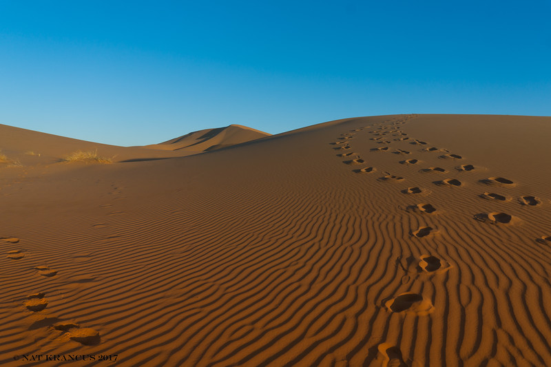 Tracks in the Sahara