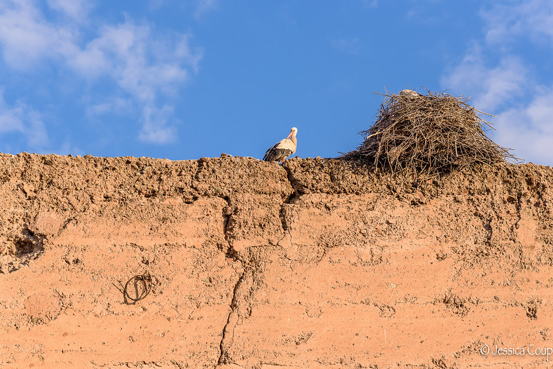 Storks on the City Wall