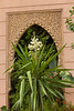 A decorative yucca plant and Moroccan architecture in Marrakesh, Morocco.