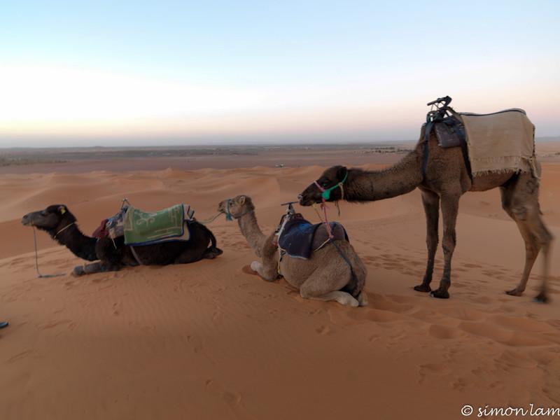 Sahara_13 12_4498920