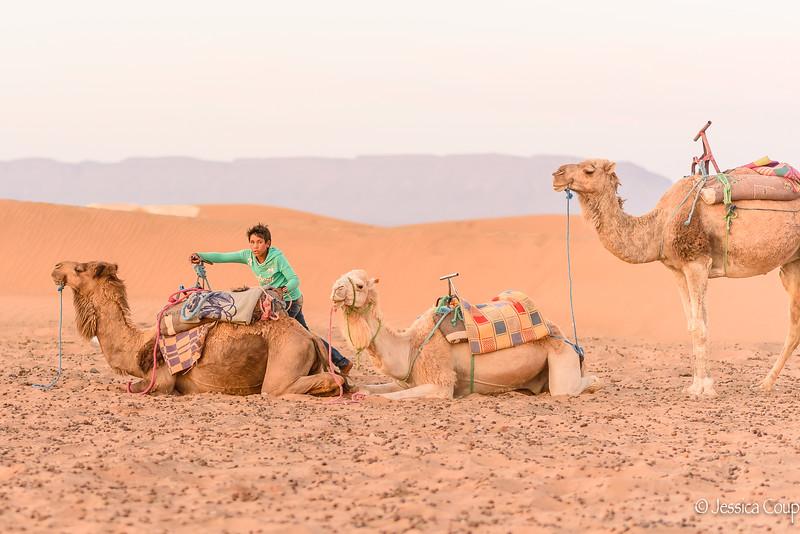 Unsaddling the Camels