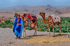 Camels at a roadside stop in the Draa Valley in rural Morocco.