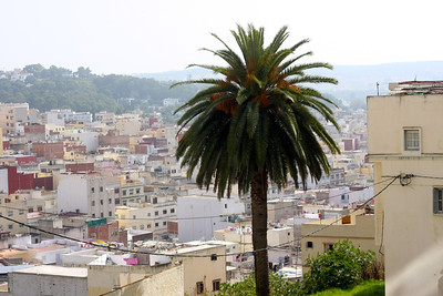 Tangier Medina & Palm
