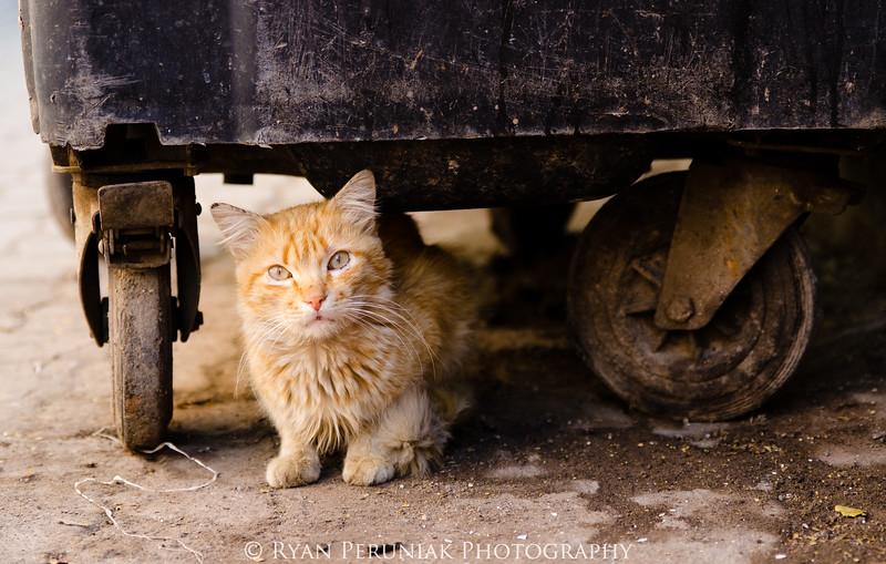 With all the activity it is easy to miss the small things such as this street cat hiding under a rubbish bin in the alleys of Marrakech.
