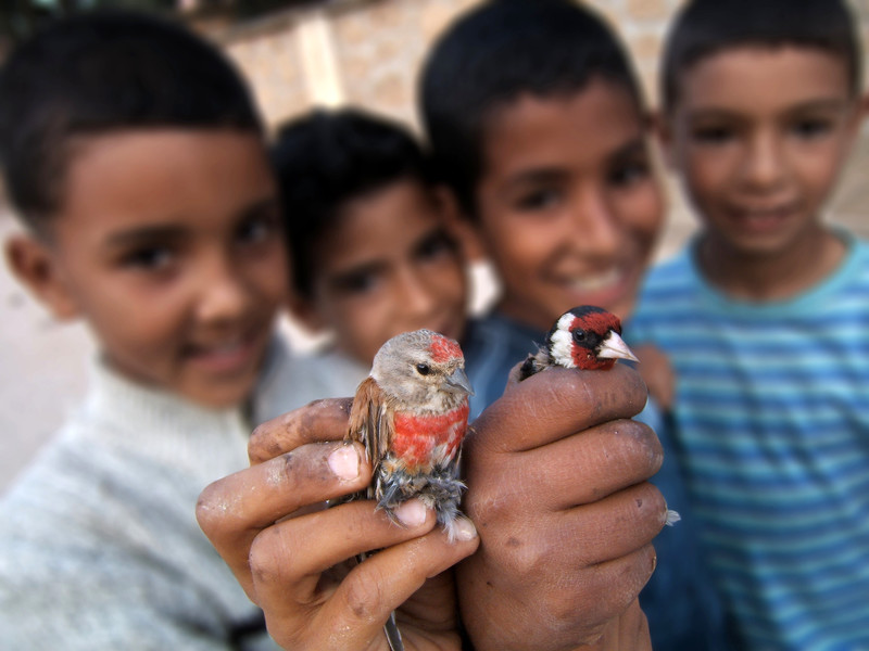 Boys catching birds in Jemaa Shaim. 2006.
