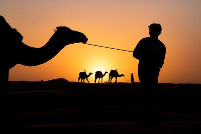 Mustafa's camels