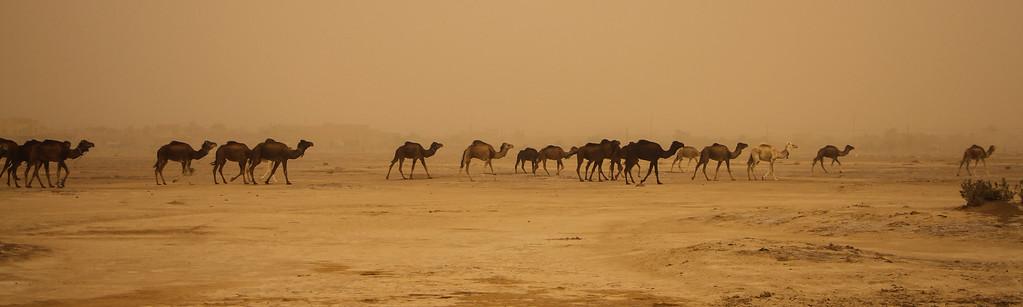 saharan sandstorm