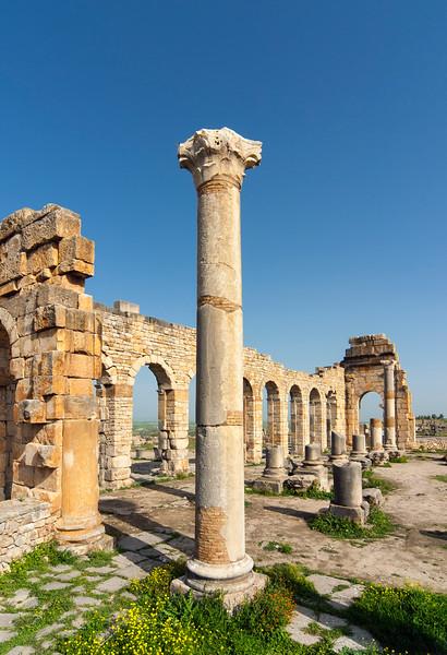Column and Basilica, Volubilis
