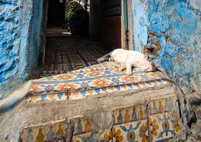 """""""Le grand-chat de Rabat"""" – Rabat, Morocco"""