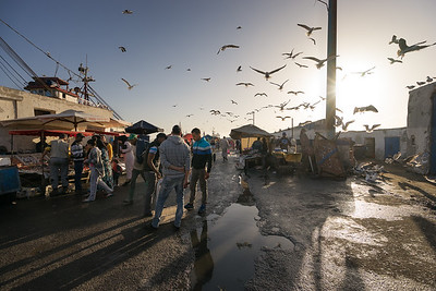 A Flock of Seagulls Over the Port of Essaouira