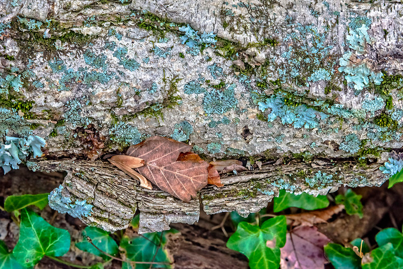 Fallen Branch, Mushroom Growth