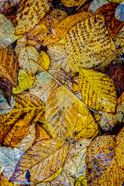 Yellow Leaves Layered