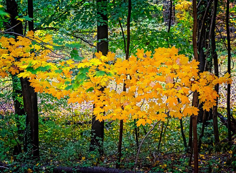 Yellow Orange Floating Leaves