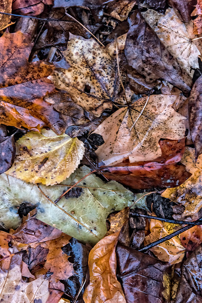 Light and Dark Stacked Leaves