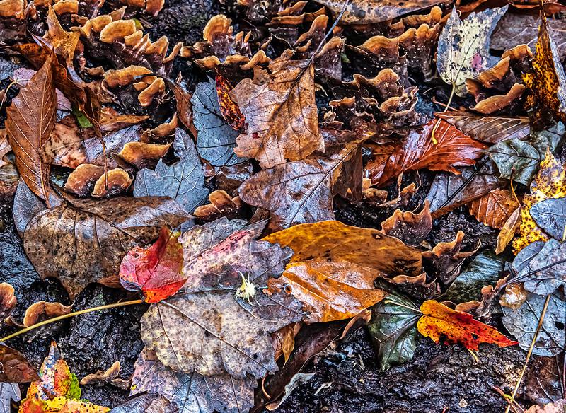 Fungi & Whitish Leaves on Fallen Tree