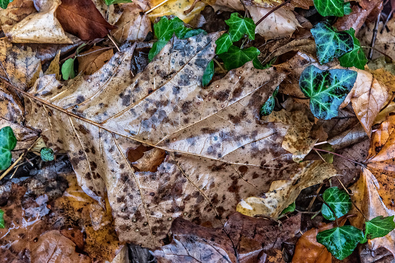 Speckled Brown Leaf with Hole