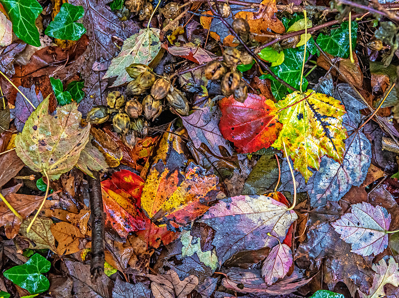 Leaves and Twigs, Fall Colors