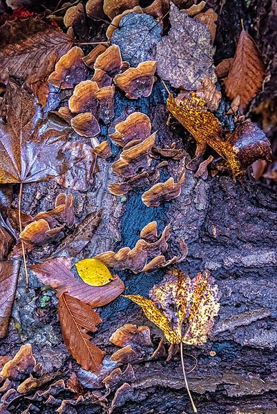 Fungi & Leaves, Dead Tree