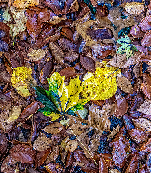 Yellow Leaves on Floating Orange Leaves