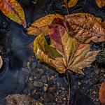 Leaves, Rocks, Creek Pebbles