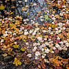 Multicolored Floating Leaves (2017)