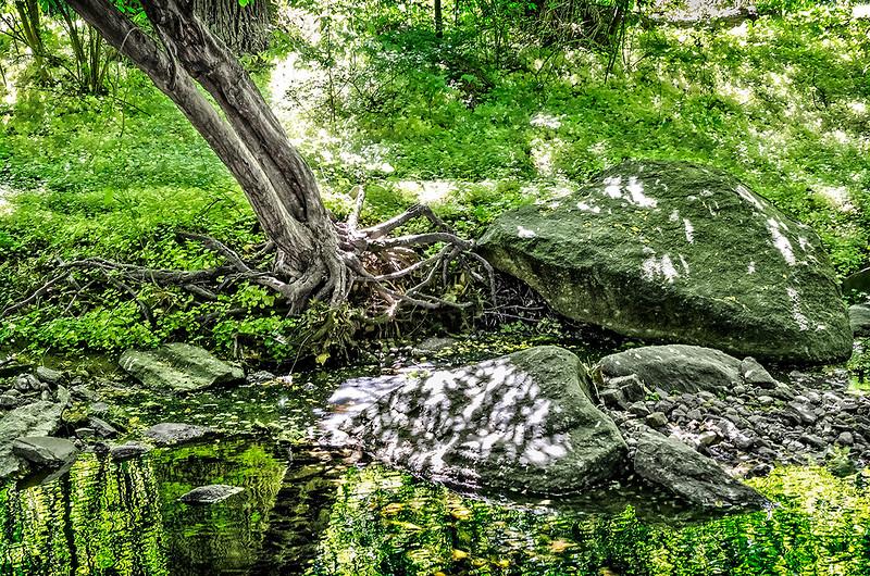 Crooked Tree, Rocks and Creek
