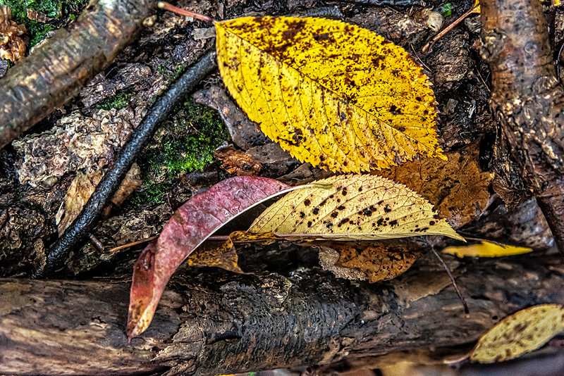 Yellow, Purple, Yellow Leaves & Fallen Tree Branches