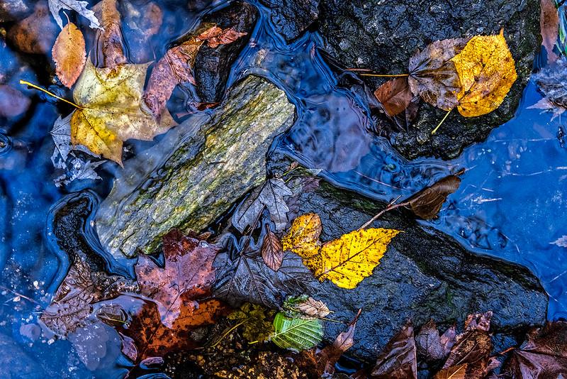 Creek, Stones, Leaves