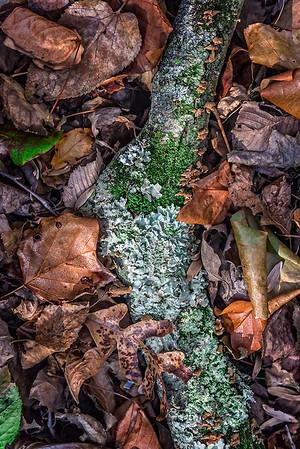 Mushrooms, Fallen Branch, Orange Leaves