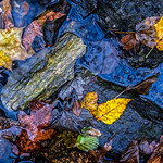 Leaves on Rocks in Creek