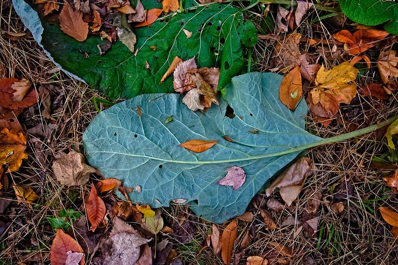 Light Green Leaf Veins