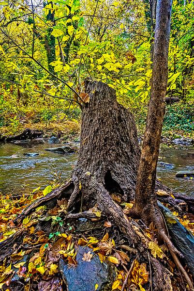 Tree Stump, Creek, Leaves