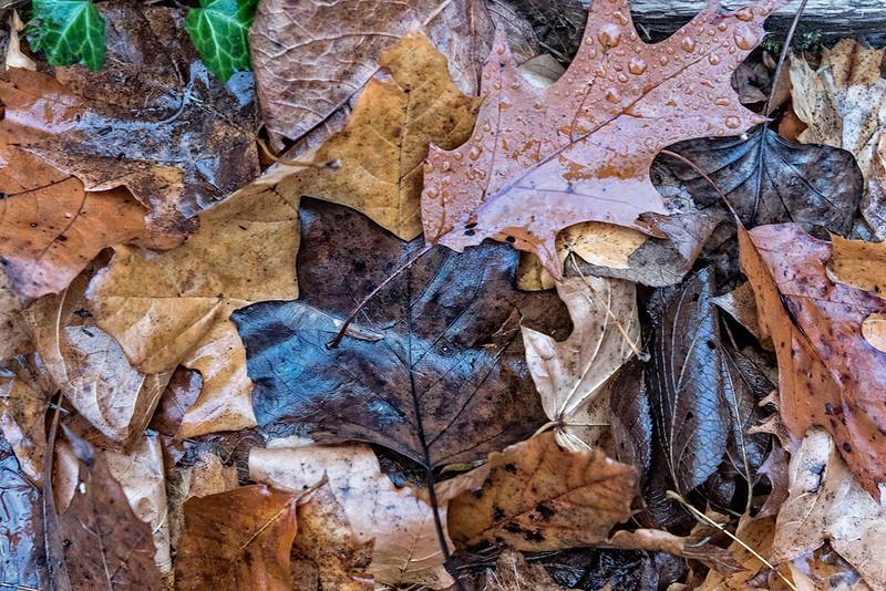 Black Leaf, Layers of Leaves,