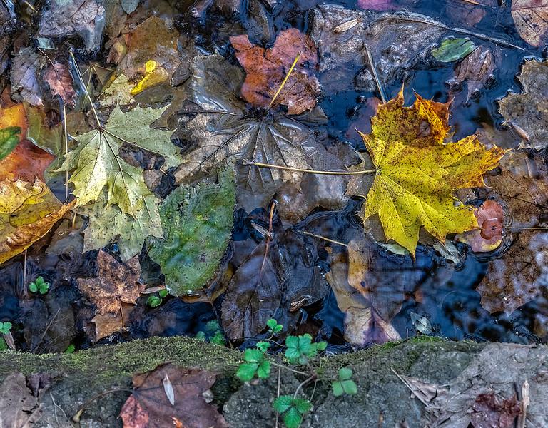 Leaves on Water, Log