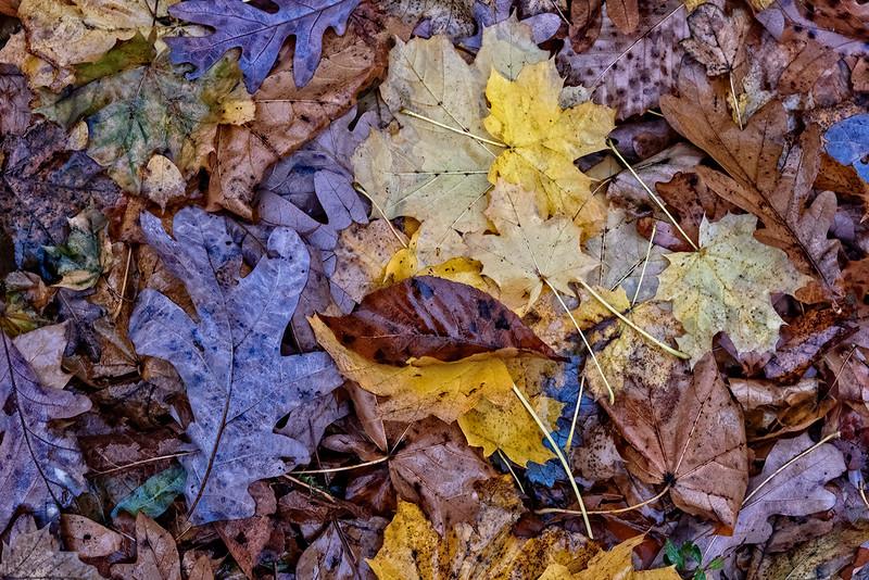 Purple, Green, Yellow, Orange Leaves