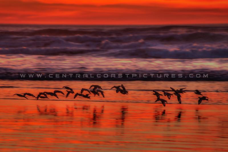 sunset birds 3135