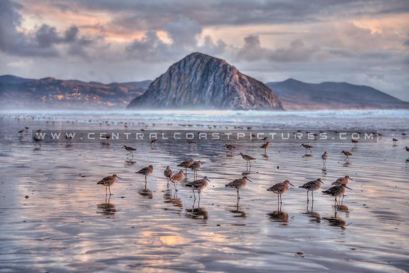morro bay birds 7139-