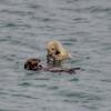morro bay otters 3418